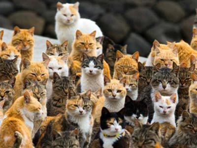 猫和老鼠的崛起!探秘奇妙的动物世界