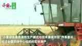 亩产828.7公斤,山东再刷冬小麦高产纪录