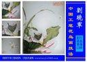 刘晓军中国工笔花鸟技法视频临摹《荷花慈姑图》第五步深入刻画荷花蝴蝶(2)