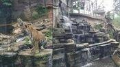 碧峰峡的动物(1)