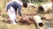 太残忍!印度一女子遭奸杀后抛尸被狗啃食-网罗天下热点-猪头传媒