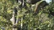 动物世界:猎豹捕获一只猴子,鬣狗望而生畏!-动物的世界-共享美好