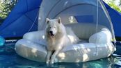 宠物:唐卡告发门罗在游泳池里跳来跳去
