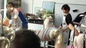 【济南一诺宠物美容学校】博美家庭装、松鼠装、俊介装