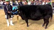 1头牛168万人民币,如此天价的松阪牛,到底贵在哪里?