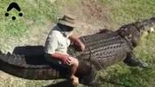 男子拿死鸡引诱3米长巨鳄上岸 骑在背上任意玩耍-奇闻异事-娱乐新奇秀