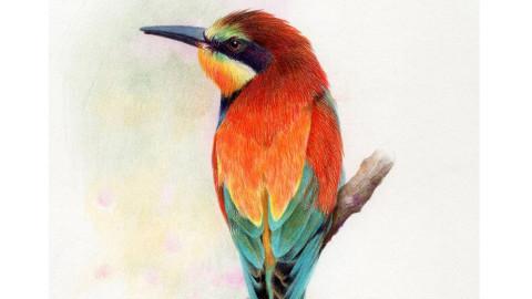 教你绘制羽毛质感的彩铅画
