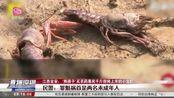 """江西吉安:""""熊孩子""""买农药毒死千斤小龙虾"""